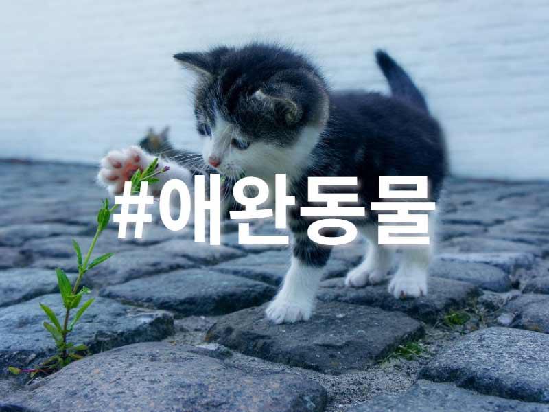 2019인스타그램 인기해시태그_핫플레이스_SNS팩토리 (7)